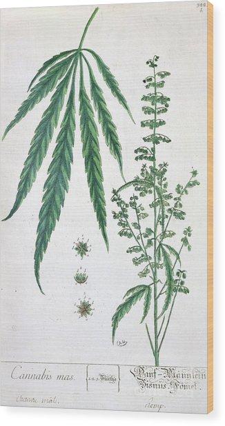 Cannabis Wood Print