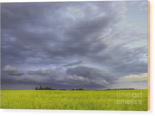 Canola And Storm Wood Print