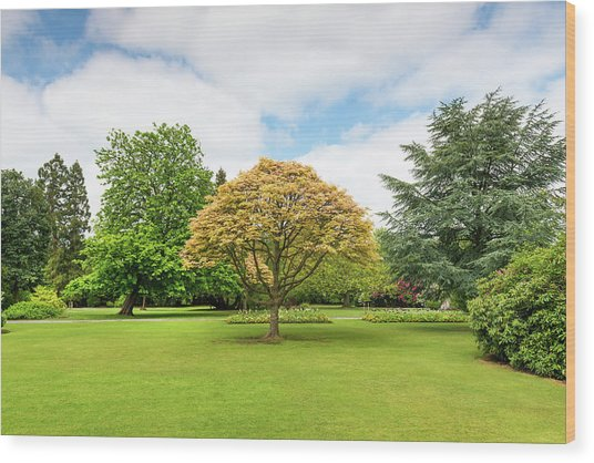 Canon Hill Park, Birmingham, England, Uk Wood Print by Chris Hepburn