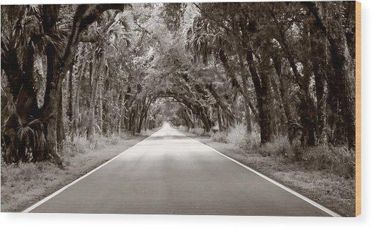 Canopy Of Trees Wood Print