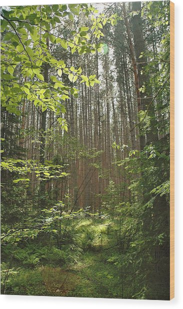 Canopy Wood Print by RJ Martens