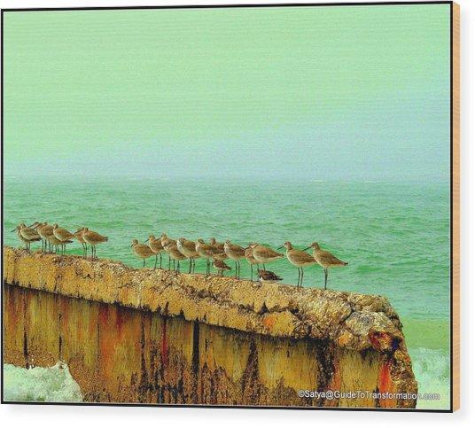 Can't Go Yet Ralph's Still Sitting Wood Print by Satya Winkelman