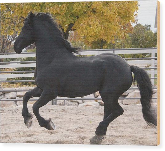 Canter In Spirit Wood Print