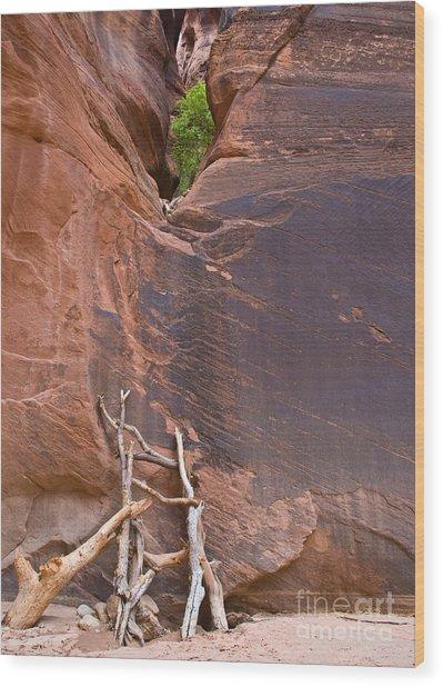 Canyon Ladder Wood Print