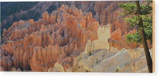 Canyon Pine Wood Print