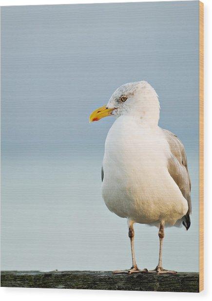 Cape Cod Seagull Wood Print
