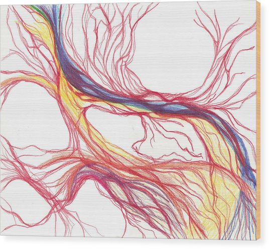 Capillaries Wood Print by Lindsay Clark
