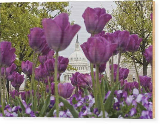 Capitol With Tulips Wood Print