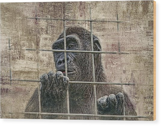 Captivity Wood Print