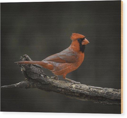 Cardinal 2011-1 Wood Print