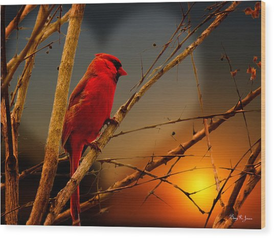 Cardinal At Sunset Valentine Wood Print