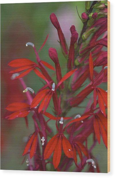 Cardinal Flower Wood Print