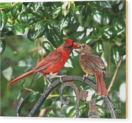 Cardinal Gift Of Love Photo Wood Print