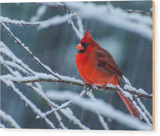 Cardinal In A Storm  Wood Print