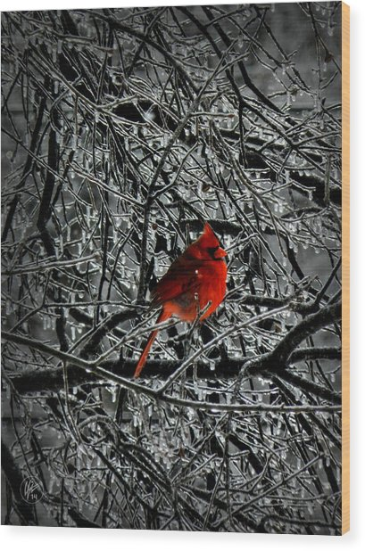 Wood Print featuring the photograph Cardinal In An Ice Storm 001 by Lance Vaughn