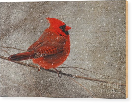 Wood Print featuring the photograph Cardinal In Snow by Lois Bryan