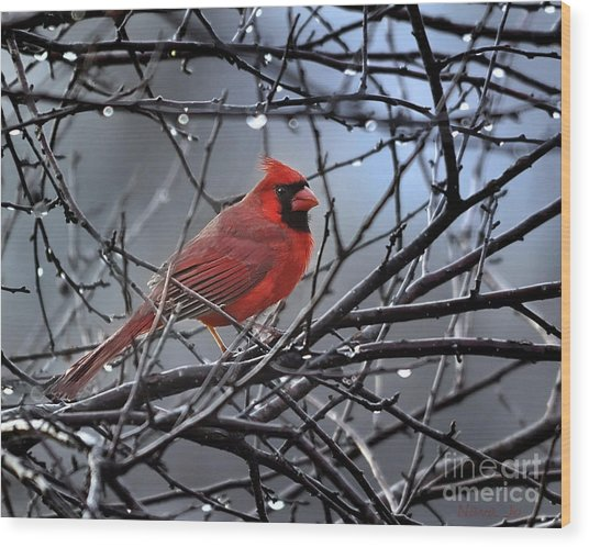 Cardinal In The Rain   Wood Print
