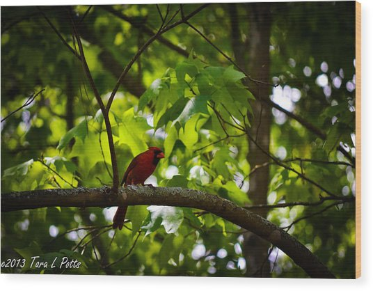Cardinal In The Trees Wood Print