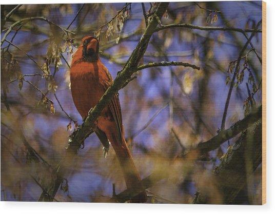 Cardinal In Waiting Wood Print by Barry Jones