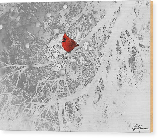 Cardinal In Winter Wood Print