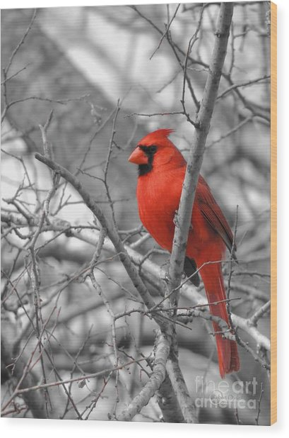 Cardinal Of Hope 002sc Wood Print