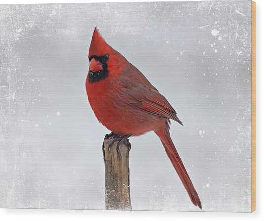 Cardinal Perching Wood Print