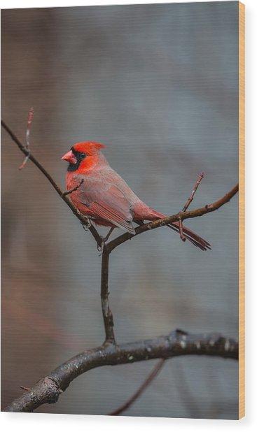 Cardinal Sing Wood Print