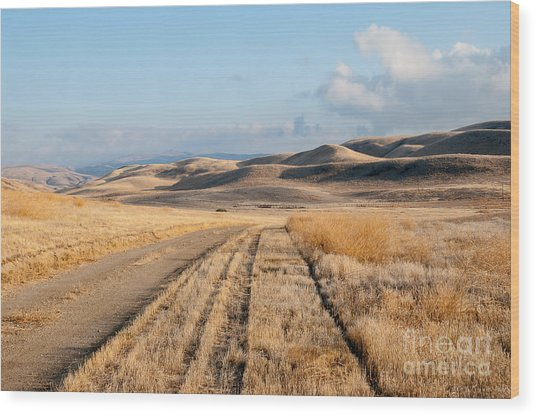 Carizzo Plains Nm 2-8559 Wood Print by Stephen Parker