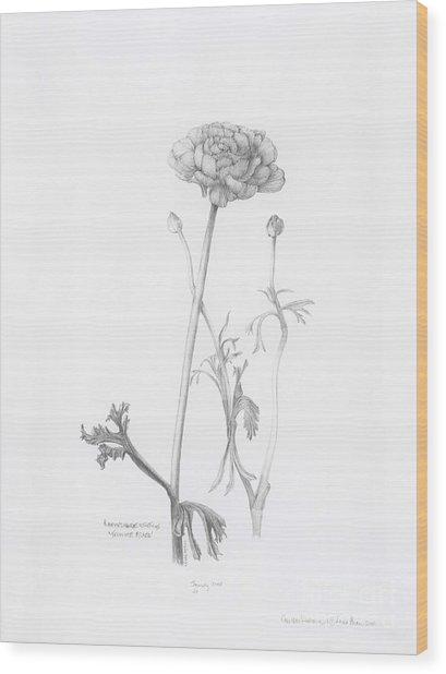 Carlsbad Ranunculus Wood Print