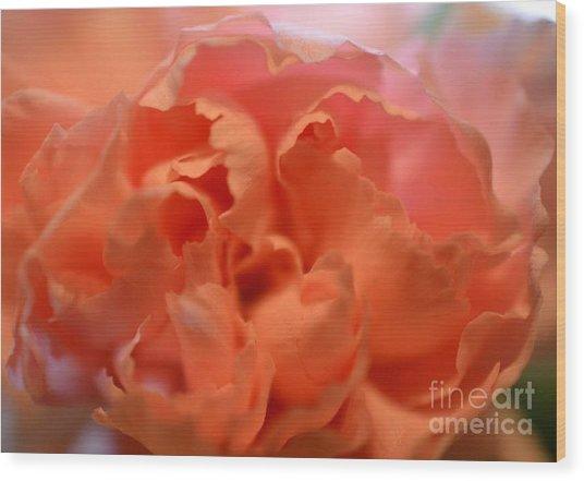 Carnation Burst Wood Print