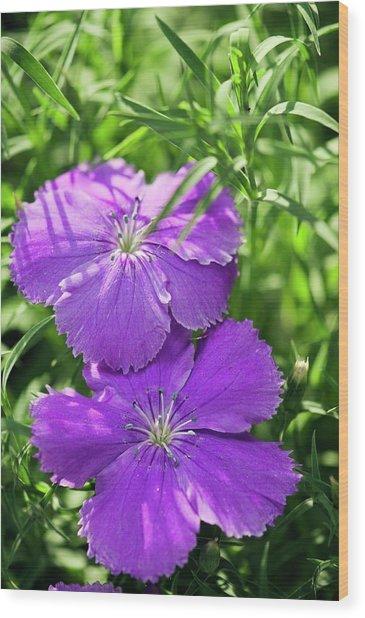 Carnation (dianthus Sp.) Wood Print