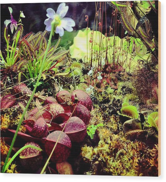 Carniverous Plants Wood Print