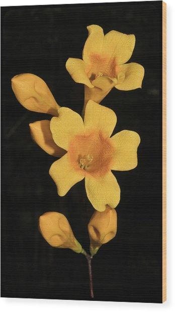 Carolina Jessamine Wood Print