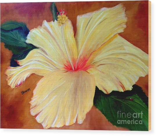 Carols Hibiscus Wood Print by Sharon Burger