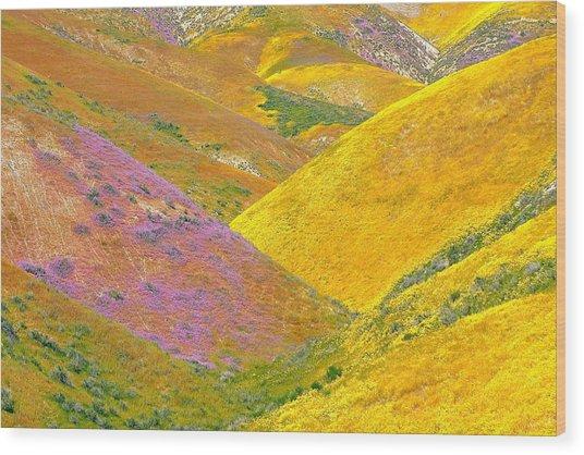 Carrizo Wildflowers Wood Print