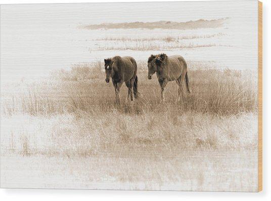 Carrot Island Ponies Wood Print