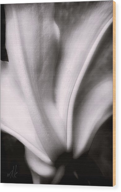 Casa Blanca Lily In Black And White Wood Print