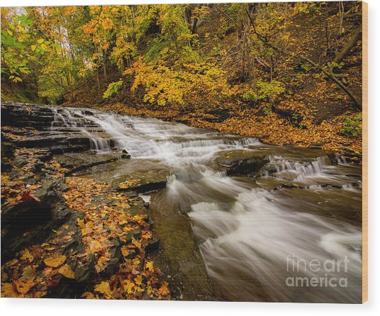 Cascadilla Gorge Trail Wood Print