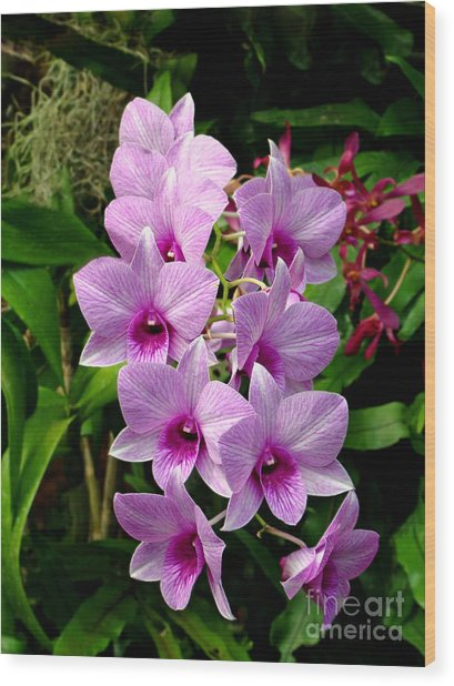 Cascading Lilac Orchids Wood Print