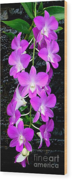 Cascading Orchids Wood Print