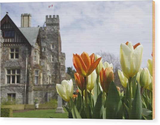 Castle Tulips Wood Print