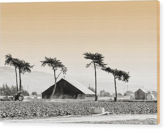 Castroville Farming Wood Print