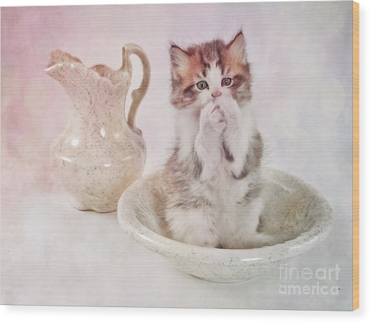 Cat Bath II Wood Print