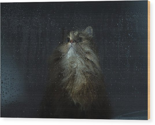 Cat By Rainy Window Wood Print by Benjamin Torode