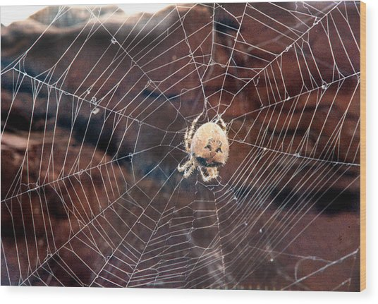 Cat Faced Spider Wood Print