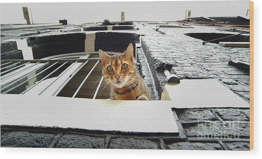 Cat In Amsterdam Wood Print
