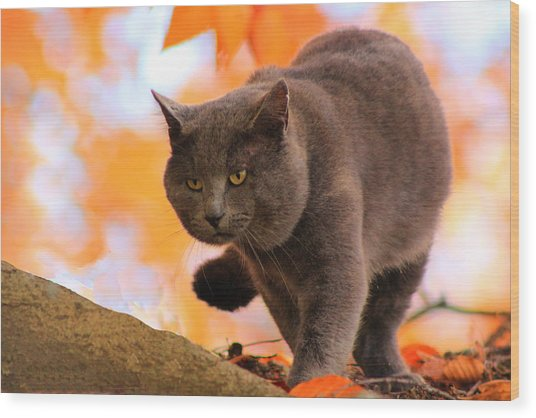 Cat On The Prowl Wood Print