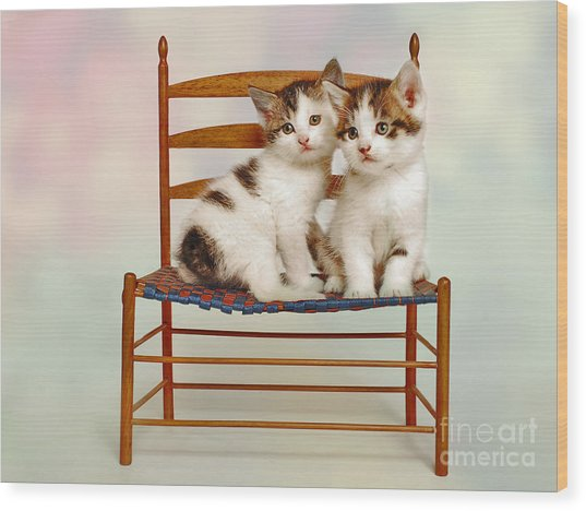 Cat Pals Wood Print