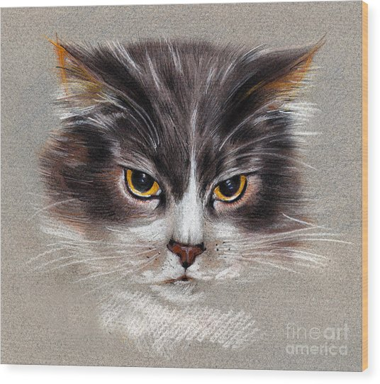 Cat Portrait Yellow Eyes Wood Print