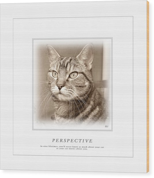 Cat Reflections 1 Wood Print